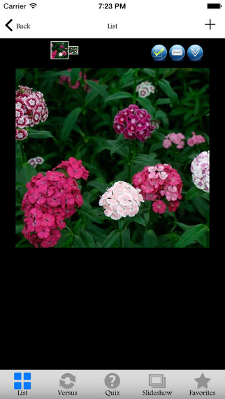 Garden Designer Expert