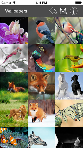 Wallpaper Collection Animals Edition