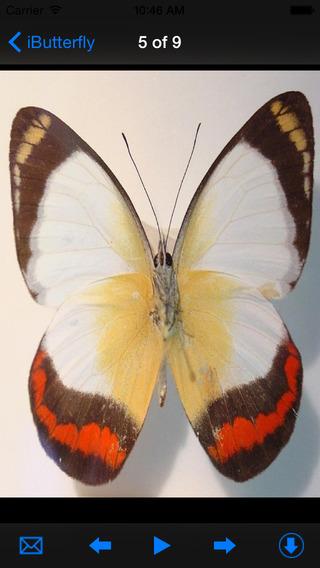 Beautiful iButterfly