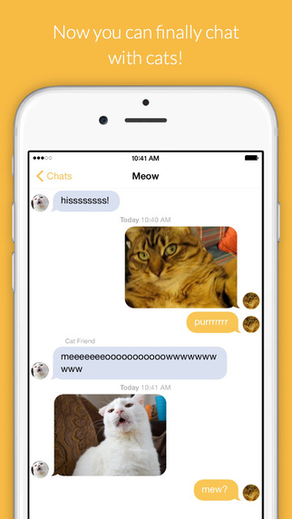 Cat Chat - Chat For Cats