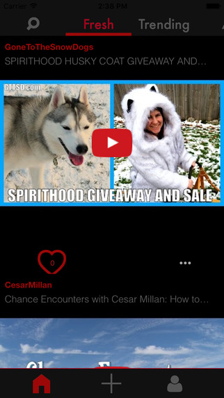 Dog Tube: Pug Labrador Retriever Bulldog Beagle Poodle and more dog videos for YouTube