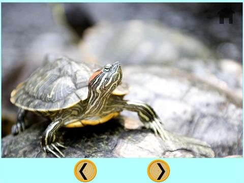 Turtles carnival shooting for kids iPad Screenshot 2