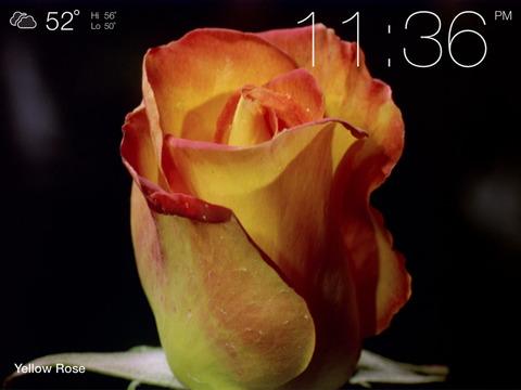 Screenshot #4 for Magic Flowers - Visual Healing