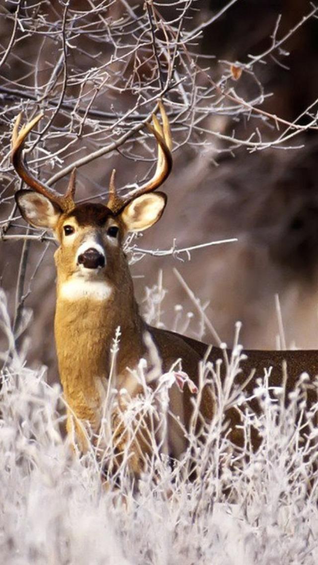 Deer full hd hdtv fhd p wallpapers hd desktop backgrounds