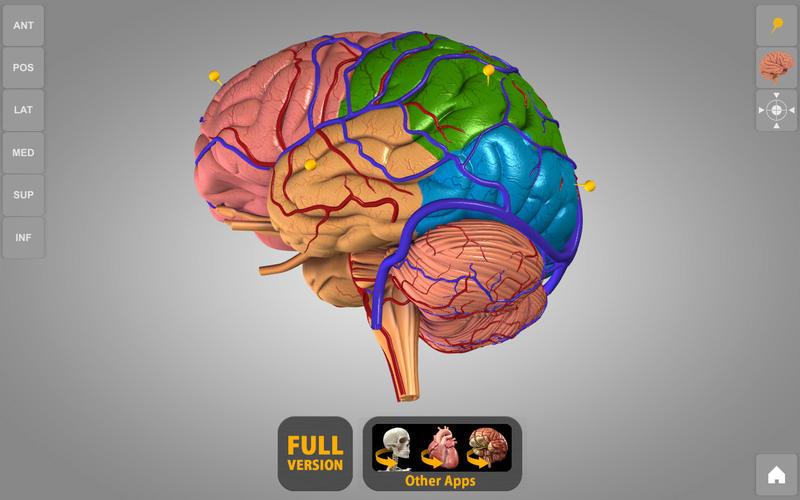 Brain 3d Atlas Of Anatomy Lite By Catfish Animation Studio Srl
