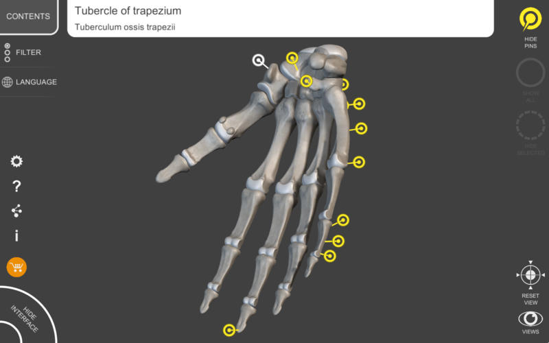 Skeletal System Lite Screenshot - 1