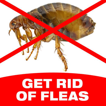 How To Get Rid Of Fleas LOGO-APP點子