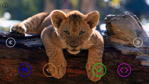 Sweet Baby Animals - Wallpapers Slideshow HD