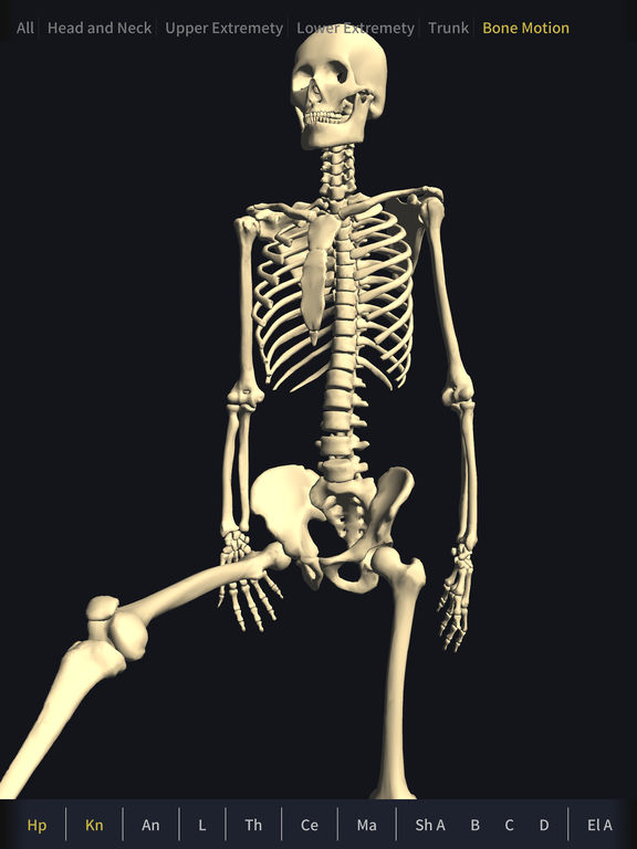 teamlabbody-3d motion human anatomy- on the app store, Skeleton