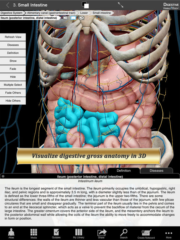 Digestive Anatomy Atlas: Essential Reference for Students and Healthcare Professionals Screenshots