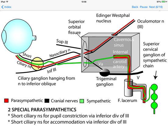 Anatomy Lectures iPad Screenshot 1