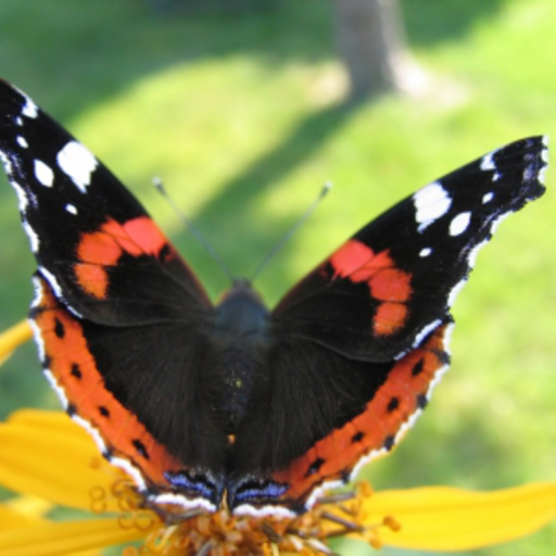 Red Admiral Butterfly Slide Puzzle