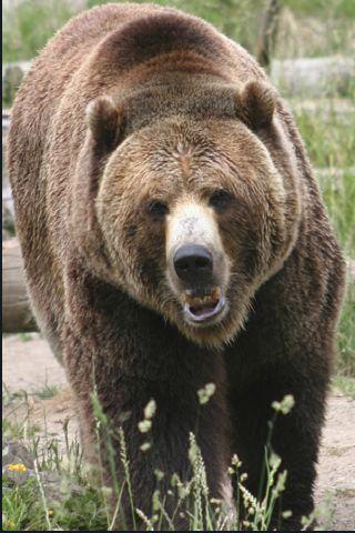 SlidePuzzle - Bear screenshot #3