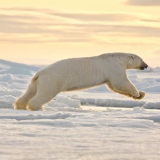 Polar Bear Leaping Slide Puzzle
