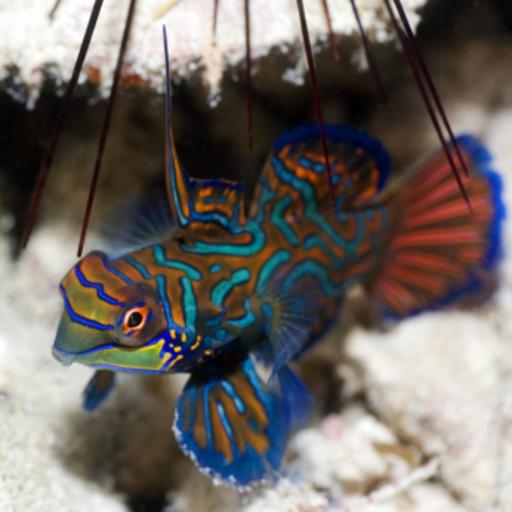 Tropical Fish Slide Puzzle