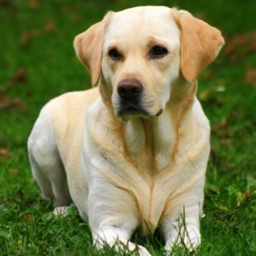 iGuides - Basics of Dog Training