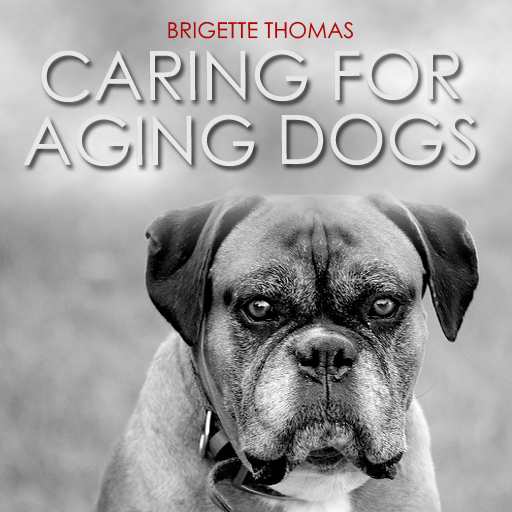 Caring For Aging Dogs