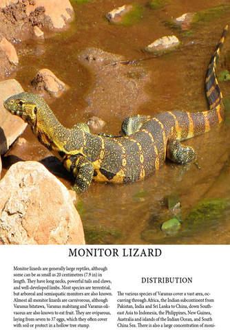 Lizards Magazine - náhled