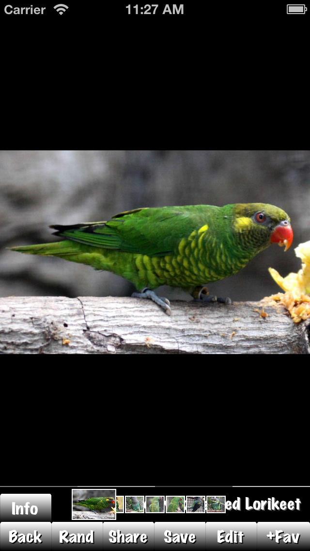 Parrots HD screenshot 2
