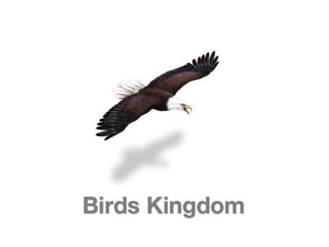 Birds Kingdom Free screenshot 4