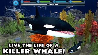 Orca Simulator screenshot 1