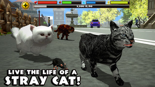 Stray Cat Simulator screenshot 1