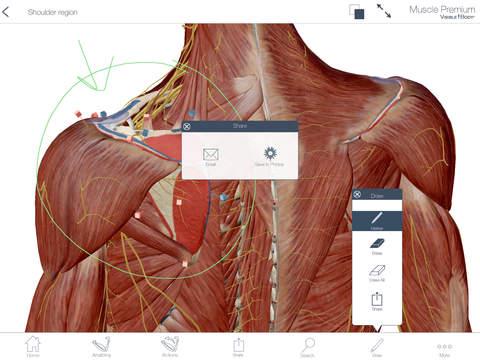 Muscles & Kinesiology screenshot 9