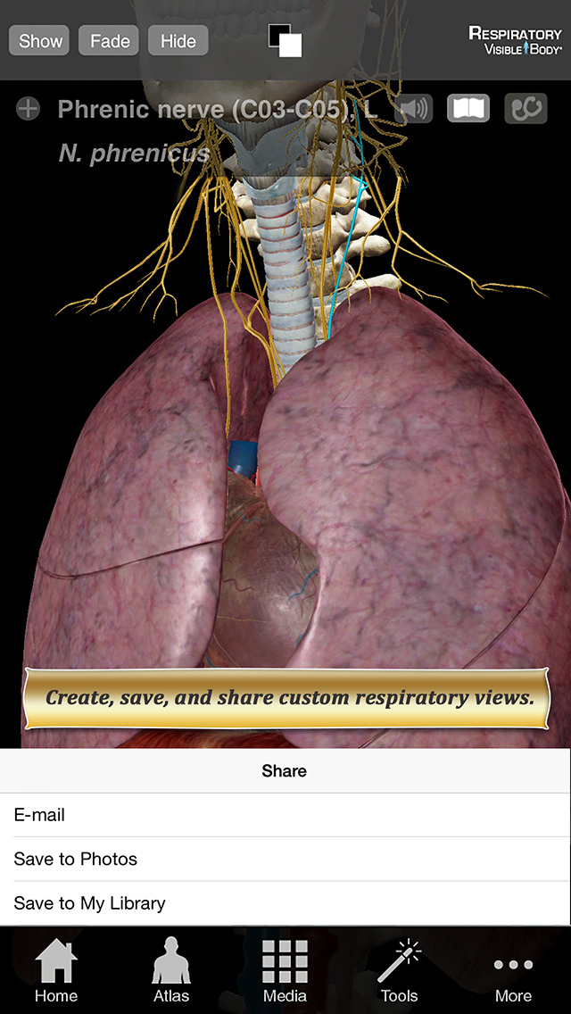 Respiratory Anatomy Atlas: Essential Reference for Students and Healthcare Professionals screenshot 3