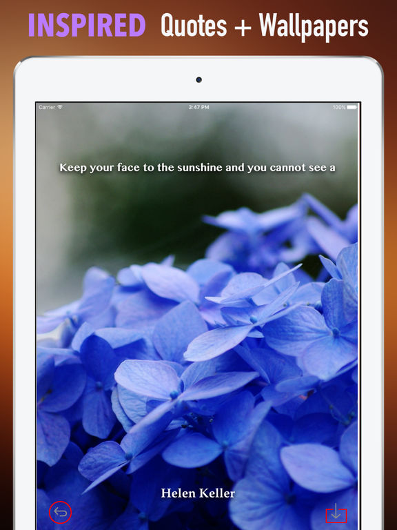 Hydrangea Wallpapers HD- Quotes and Art Pictures screenshot 10
