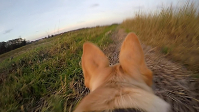 VR Dog Simulator with Google Cardboard screenshot 1
