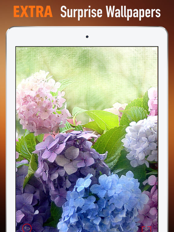 Hydrangea Wallpapers HD- Quotes and Art Pictures screenshot 8