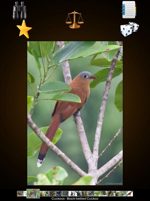 Cuckoos Collection screenshot 8