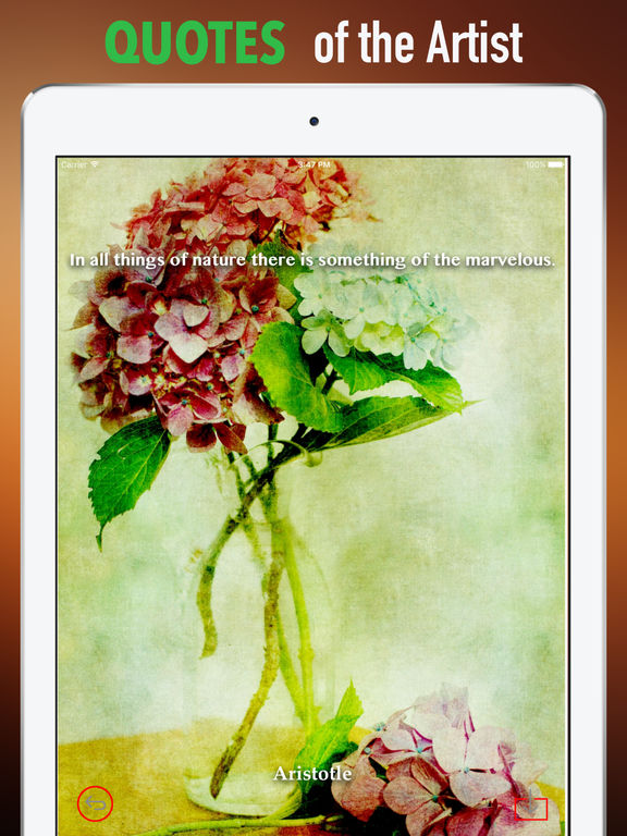 Hydrangea Wallpapers HD- Quotes and Art Pictures screenshot 9