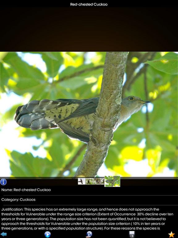 Cuckoos Collection screenshot 7