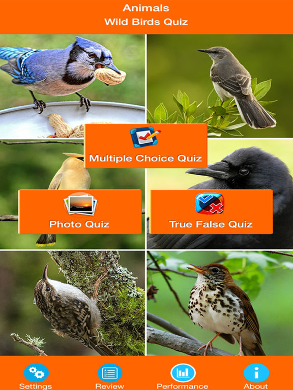 Animals : Wild Birds Quiz screenshot 6