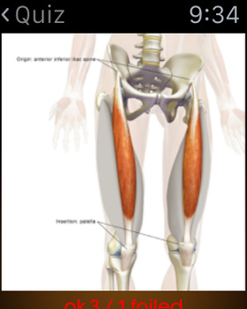 Human Muscles Guide screenshot 13