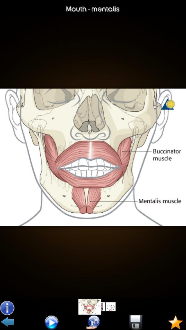 Human Muscles Guide screenshot 3