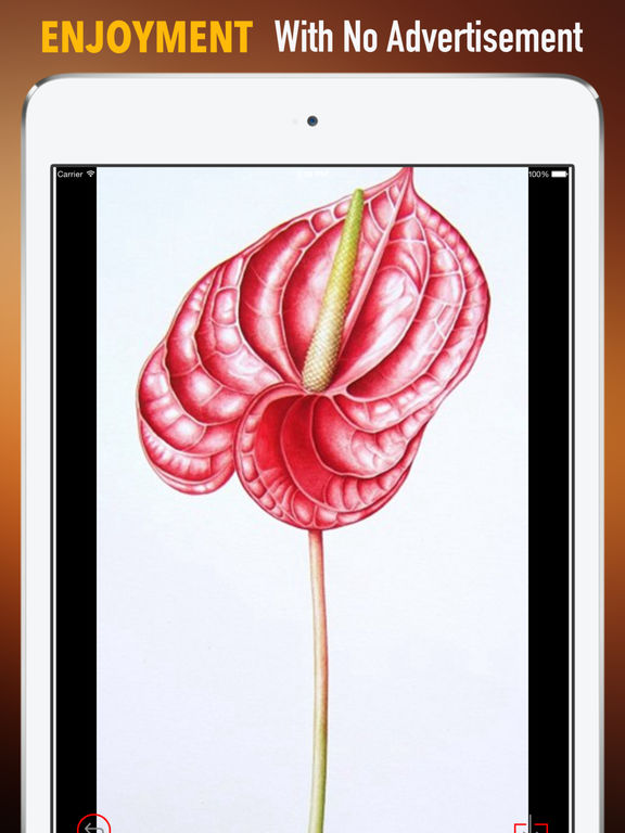 Anthurium Wallpapers HD: Quotes Backgrounds with Art Pictures screenshot 7