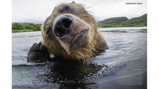 Best of BBC Wildlife Magazine screenshot 1