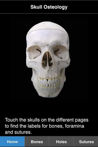 Skull Osteology - náhled