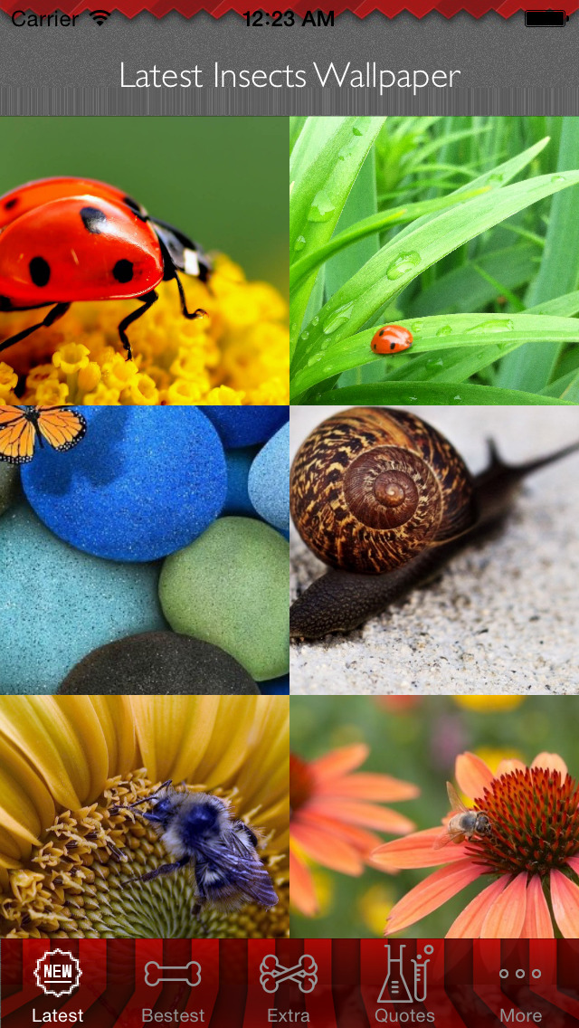 Best HD Insects Art Wallpapers for iOS 8 Backgrounds: Animal Theme Pictures Collection screenshot 1