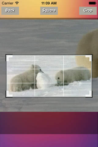 VideoCropFX - náhled
