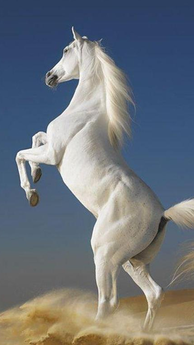 Horse Wallpapers HD - Collection of Running Horses screenshot 5