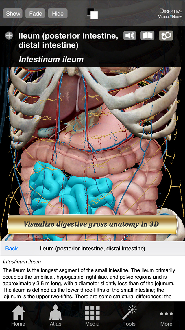 Digestive Anatomy Atlas: Essential Reference for Students and Healthcare Professionals screenshot 1