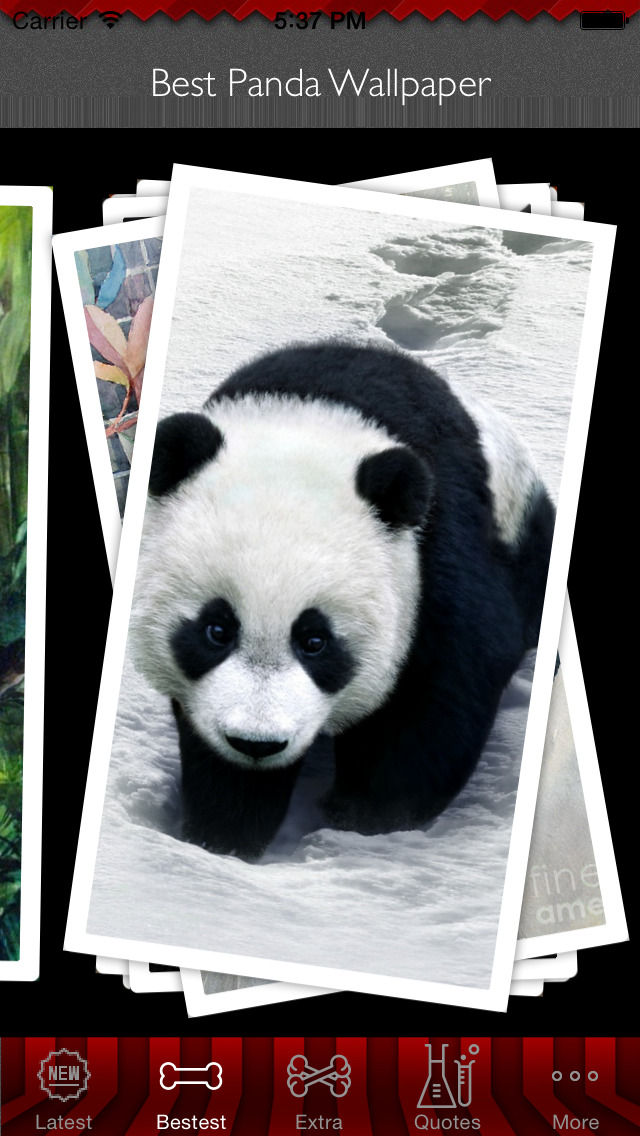Best HD Panda Art Wallpapers for iOS 8 Backgrounds: Animal Theme Pictures Collection screenshot 5