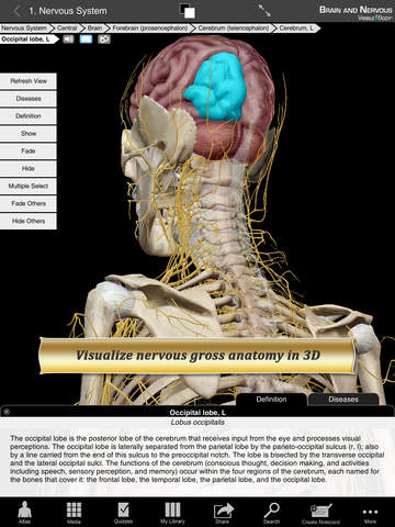 Brain and Nervous Anatomy Atlas: Essential Reference for Students and Healthcare Professionals screenshot 6