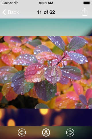 Rain Drops Wallpaper: Best HD Wallpapers - náhled
