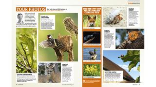 Best of BBC Wildlife Magazine screenshot 5