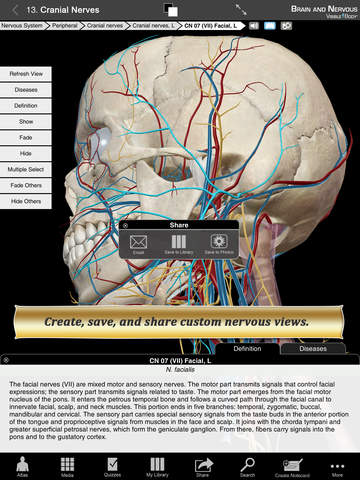 Brain and Nervous Anatomy Atlas: Essential Reference for Students and Healthcare Professionals screenshot 8