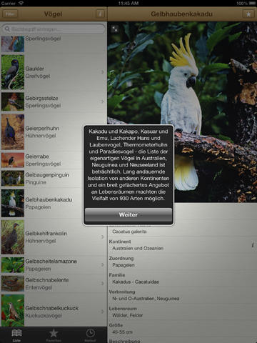 1000 Vögel aus aller Welt screenshot 7